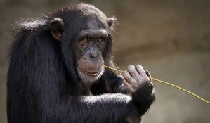 Otvoren zoo vrt u kojem je u požaru u novogodišnjoj noći stradalo 30 životinja