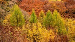 RHMZ: Jesen toplija i suvlja