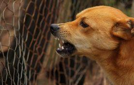 Pas izujedao sedam osoba u Jagodini