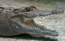 Krokodil ugrizao ženu koja se o njemu starala, zoo vrt ubio životinju