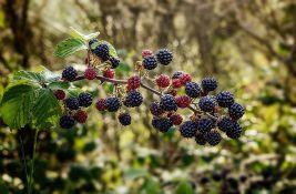 Izvoz bobičastog voća veći za trećinu