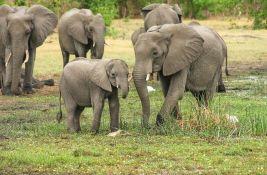 Slon iz krda koje luta Kinom uhvaćen i vraćen u rezervat
