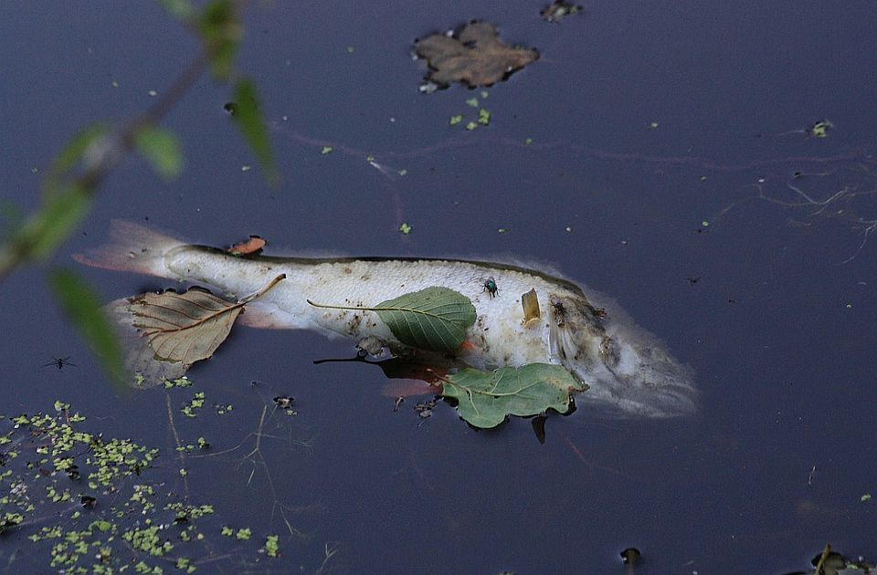 Krivična prijava protiv vlasnika firme zbog pomora ribe u Kolubari