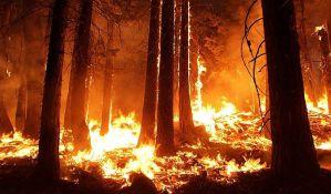 Tajnom vatrogasnom akcijom spaseno drevno australijsko drveće