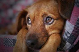 Spotify napravio listu pesama za pse koji ostaju sami kod kuće