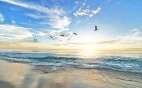 Milion morskih ptica uginulo usled toplotnog talasa
