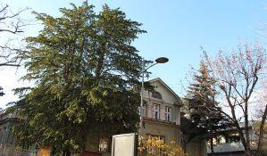 FOTO: Novi Sad zaštitio četiri stabla kao spomenike prirode