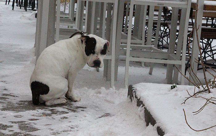 Meteorolog Todorović o tome kad nas u martu očekuje sneg
