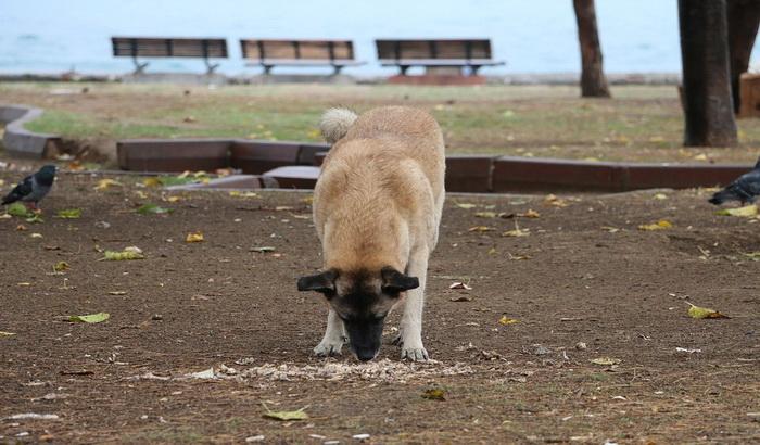 Tužilaštvo traži pritvor zbog šutiranja šteneta da uhapšeni ne bi pobegao