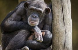 Životinje koje su nam najsličnije po DNK