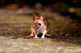 Evropski parlament razmatra ukidanje istraživanja na životinjama