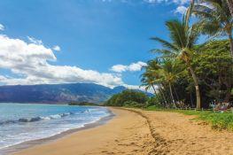 Turisti kažnjeni sa po 500 dolara zbog dodirivanja havajske foke