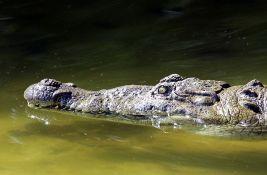 Dve Britanke povredio krokodil dok su plivale u laguni u Meksiku