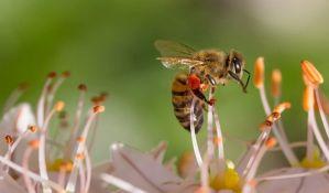 Živadinović: Najveći problem pčelara u Srbiji trovanje pčela