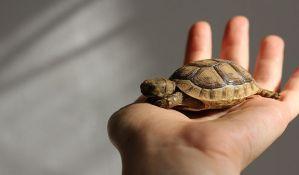 Malezijske vlasti zaplenile drogu i više od 5.000 kornjača