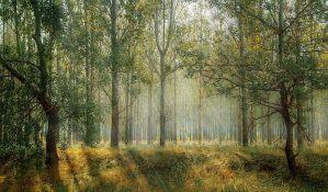 Grčki sveštenici će blagosloviti šumu da bi je spasli od insekata