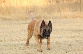 Fudbalski klub iz Belgije koristi pse za otkrivanje novih slučajeva korone