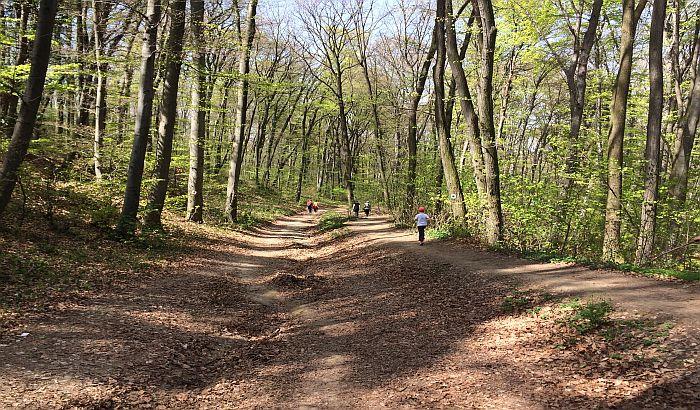 DRI: Vojvodina sa najnižim stepenom šumovitosti u Srbiji, ali i u Evropi