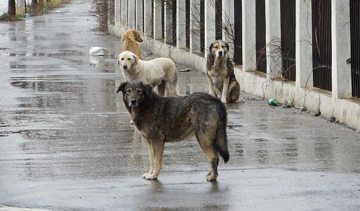 Uhvaćeno šest pasa koji su izujedali staricu i studentkinju