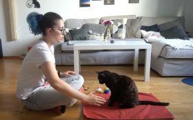VIDEO: Mačka za minut napravila 26 trikova i ušla u Ginisovu knjigu rekorda