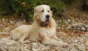 U čast omiljenog predsednikovog psa Turkmenistan dobija državni praznik