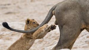 Najsmešnije fotografije iz sveta divljih životinja