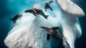 U fotografijama: Najbolje slike podvodnog sveta