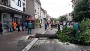 Seča stabala u Aleksincu: Za opštinu opravdano, ali ne i za građane