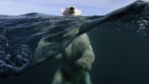 Klimatske promene: Dokle smo stigli i šta pojedinci mogu da urade