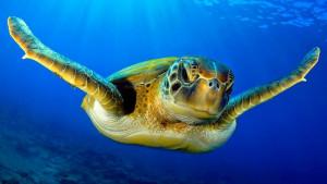 Meso kornjače - idealna dijeta za preživljavanje