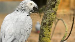 Papagaji koji psuju: Nekulturni papagaji uklonjeni iz parka