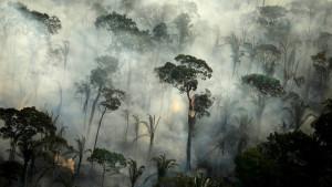 Brazil i Amazonija: Strašni požari bi ponovo ponovo mogli da progutaju prašume