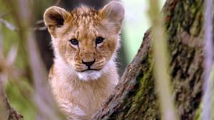 Mladunče lava pronađeno u stanu u Francuskoj