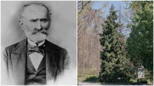 Josif Pančić i omorika: Kako je naučnik otkrio