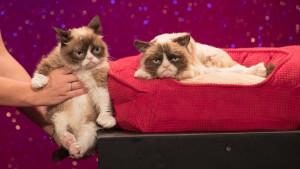 Viralni video snimci mačaka i čovek koji je opsednut njima