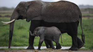 Izveštaj Svetske organizacije za prirodu: Ljudska potrošnja odgovorna za nestanak životinjskih vrsta