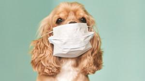 """Šetnja pasa u doba korona virusa: """"To nije hir, već fiziološka potreba"""""""