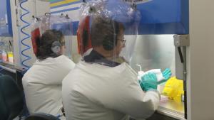 Korona virus: Naučnici u Australiji započeli testiranje mogućih vakcina