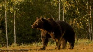 Životinje i lov: Princ iz Lihtenštajna osumnjičen da je ubio jednog od najvećih evropskih medveda