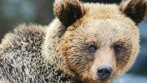 Kako vi možete pomoći ugroženim životinjama Srbije