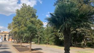 Palme u Beogradu: Da li je egzotičnom drveću mesto na Kalemegdanu