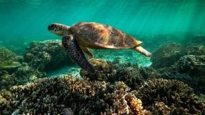 Unesko: Veliki koralni greben bi trebalo se nađe na listi ugroženih