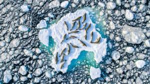 Fotografije prirode: Antarktičke foke iz drona i drugi neverovatni prizori