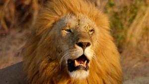 Češka: Lav kućni ljubimac ubio vlasnika