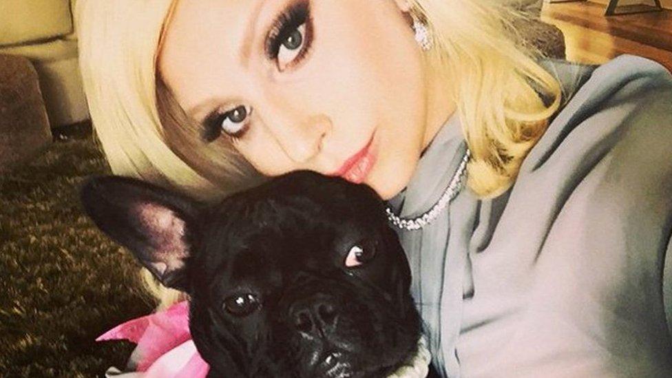 Lejdi Gaga: Napadač upucao šetača pasa muzičke zvezde i ukrao njena dva buldoga