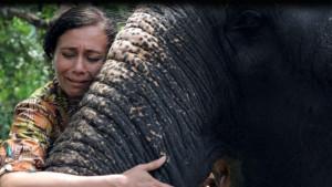 Životinje i zlostavljanje: Muče slonove do smrti, a onda rone krokodilske suze