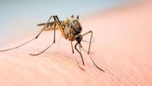 Leto, alkohol i komarci: Zašto češće napadaju kada pijete