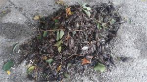 Letnje oluje u Crnoj Gori: Šta ubija podgoričke vrapce
