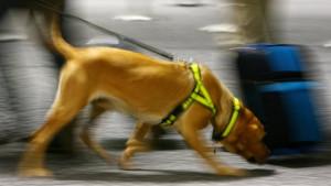 Amerika, Jordan i životinje: Amerikanci zabrinuti - prestaju da šalju pse tragače