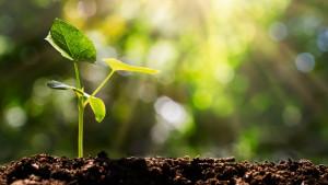 Klimatske promene i sadnja drveća: Najveći svetski poduhvati